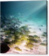 Fish Swim In The Light Canvas Print