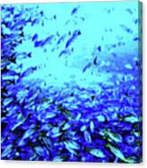 Fish Traffic Canvas Print
