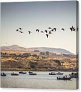 Fishing Boats And Blue Herons Canvas Print