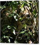 Fishing Cat Canvas Print