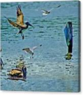 Fishing Pelican And Seagulls Canvas Print