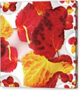 Five Autumn Leaves Canvas Print