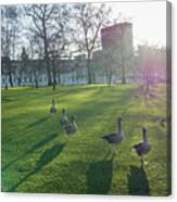 Five Ducks Walking In Line At Sunset With London Museum In The B Canvas Print