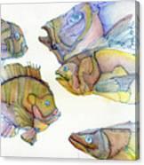 Five Fading Fish Canvas Print