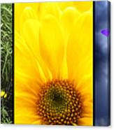 Five Flower Composite Canvas Print