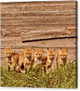 Five Fox Kits By Old Saskatchewan Granary Canvas Print