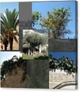 Five Fruit Of Israel Canvas Print