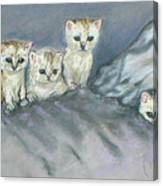 Five Kitties Canvas Print
