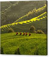 Five Ladies In Rice Fields Canvas Print