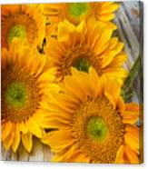 Five Moody Sunflowers Canvas Print