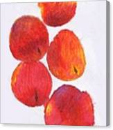 Five Nectarines  Canvas Print