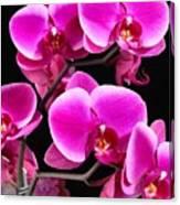 Five Orchids  Canvas Print