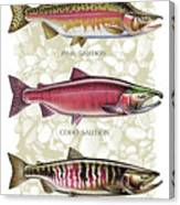 Five Salmon Species  Canvas Print