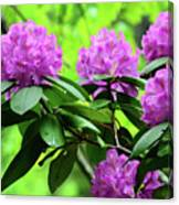 Five Wild Azaleas Blossoms Canvas Print