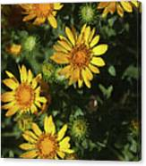 Five Yellow Flowers  Canvas Print