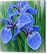 Flag Iris Blues Canvas Print