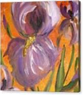 Flag Iris Canvas Print