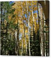 Flagstaff Aspen 796 Canvas Print