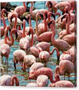 Flamboyance Of Flamingos Canvas Print