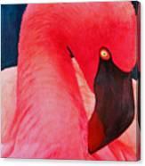 Flamboyant Flamingo Canvas Print