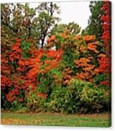 Flamboyant Forest Canvas Print