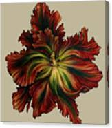 Flame Red Tulip II Canvas Print