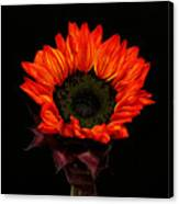 Flaming Flower Canvas Print