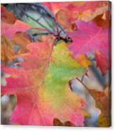 Flaming Oak Canvas Print