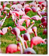 Flamingo 6 Canvas Print