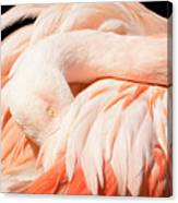 Flamingo Abstract Canvas Print