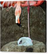 Flamingo And Chick Canvas Print