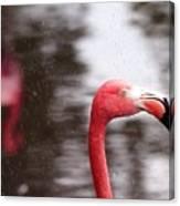 Flamingo And Rain Canvas Print