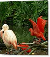 Flamingo And Scarlet Ibis Canvas Print