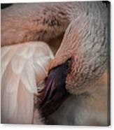 Flamingo Artful Pose Canvas Print