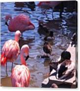 Flamingo Family  Canvas Print