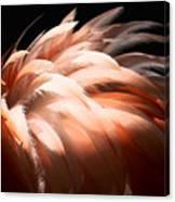 Flamingo Feathers Canvas Print