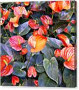Flamingo Flower Bed Canvas Print