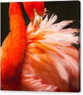 Flamingo Fluff Canvas Print