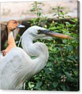 Flamingo Gardens - Great Egret Profile Canvas Print