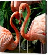 Flamingo Heart Canvas Print