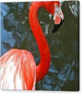 Flamingo In Profile Canvas Print