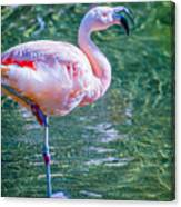 Flamingo In Still Waters Canvas Print