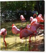 Flamingo Land Canvas Print