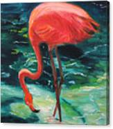 Flamingo Of Homasassa Canvas Print