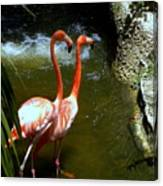 Flamingo Pair Canvas Print