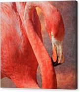 Flamingo Portrait Canvas Print