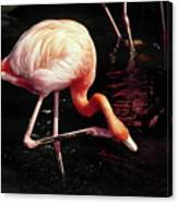 Flamingo Scratching Head Canvas Print