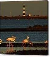 Flamingo Sunrise Canvas Print