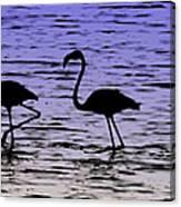 Flamingo Walk - Venezuela Canvas Print