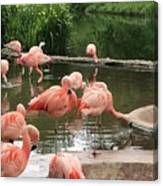 Flamingoes Looking Oh So Pretty  Canvas Print